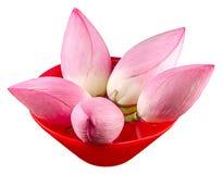 Τα ρόδινα λουλούδια λωτού, κρίνος νερού σε ένα κόκκινο κύπελλο με το νερό, κλείνουν επάνω Στοκ εικόνα με δικαίωμα ελεύθερης χρήσης