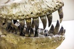 Τα σαγόνια τυραννοσαύρων κλείνουν επάνω Στοκ εικόνα με δικαίωμα ελεύθερης χρήσης