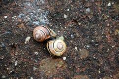 Τα σαλιγκάρια αντιμετωπίζουν Στοκ Εικόνες