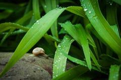 Τα σαλιγκάρια κήπων είναι πάντα ευτυχή, δεν πιέζουν χρονικά ποτέ στοκ εικόνες