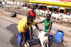 Τα σενεγαλέζικα αγόρια πλένουν ένα πρόβατο Στοκ εικόνες με δικαίωμα ελεύθερης χρήσης