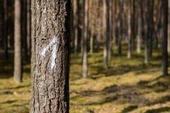 Τα σημάδια στα δέντρα χρωμάτισαν το άσπρο χρώμα Σημάδια στις δασικές συγκομιδές επάνω Στοκ εικόνα με δικαίωμα ελεύθερης χρήσης