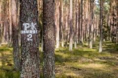 Τα σημάδια στα δέντρα χρωμάτισαν το άσπρο χρώμα Σημάδια στις δασικές συγκομιδές επάνω Στοκ φωτογραφία με δικαίωμα ελεύθερης χρήσης