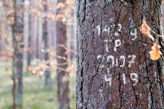Τα σημάδια στα δέντρα χρωμάτισαν το άσπρο χρώμα Σημάδια στις δασικές συγκομιδές επάνω Στοκ Εικόνες