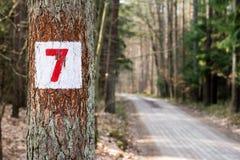 Τα σημάδια στα δέντρα χρωμάτισαν το άσπρο χρώμα Σημάδια στις δασικές συγκομιδές επάνω Στοκ Φωτογραφίες