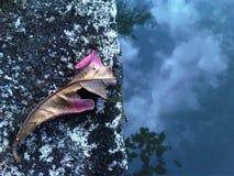 Τα σκαμνιά στο πάρκο Στοκ Φωτογραφίες