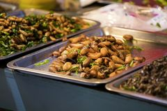 Τα σκουλήκια και τα έντομα μπορούν να χρησιμοποιηθούν για να μαγειρεψουν τα τρόφιμα Στοκ φωτογραφίες με δικαίωμα ελεύθερης χρήσης