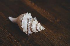 Τα σκουλαρίκια και το βραχιόλι των μαργαριταριών βρίσκονται στο κοχύλι Στοκ Εικόνες