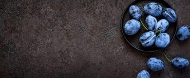 Τα σκούρο μπλε δαμάσκηνα στο χυτοσίδηρο καλύπτουν στο μαύρο υπόβαθρο, μακροχρόνιο σχήμα εμβλημάτων Στοκ Εικόνα