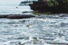 Τα σκυλιά κολυμπούν καλά Στοκ Εικόνες