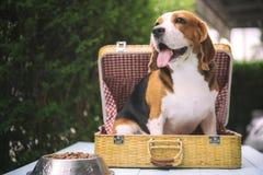 Τα σκυλιά λαγωνικών στέκονται στοκ φωτογραφία