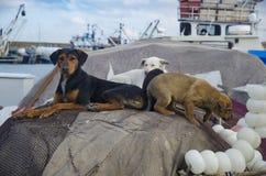 Τα σκυλιά είναι τόσο χαριτωμένα στα δίχτυα του ψαρέματος Στοκ εικόνα με δικαίωμα ελεύθερης χρήσης