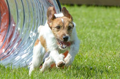 Τα σκυλιά παρουσιάζουν Στοκ φωτογραφία με δικαίωμα ελεύθερης χρήσης