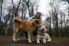 Τα σκυλιά σταθμεύουν δημόσια Στοκ Εικόνες
