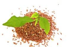 Τα σπορόφυτα και το φυτό ρυζιού Στοκ Εικόνα