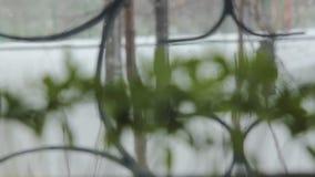 Τα σπορόφυτα ντοματών φιλμ μικρού μήκους