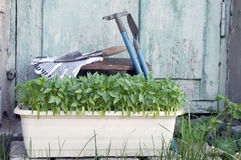 Τα σπορόφυτα, πότισμα μπορούν και να καλλιεργήσουν εργαλεία για Στοκ Εικόνες