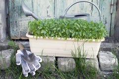 Τα σπορόφυτα, πότισμα μπορούν και να καλλιεργήσουν εργαλεία για Στοκ φωτογραφίες με δικαίωμα ελεύθερης χρήσης