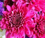 τα στενά λουλούδια οδοντώνουν επάνω Στοκ φωτογραφία με δικαίωμα ελεύθερης χρήσης