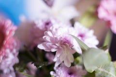 τα στενά λουλούδια οδοντώνουν επάνω Στοκ Φωτογραφίες
