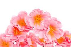 τα στενά λουλούδια οδοντώνουν επάνω Στοκ Φωτογραφία