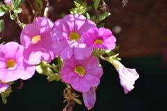 τα στενά λουλούδια οδοντώνουν επάνω Στοκ Εικόνες