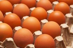 Τα συνεχή καφετιά αυγά κοτόπουλου βρίσκονται στο δίσκο χαρτονιού Στοκ εικόνες με δικαίωμα ελεύθερης χρήσης