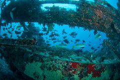 Τα συντρίμμια και τα ψάρια κολυμπούν σε Gili, Lombok, Nusa Tenggara Barat, υποβρύχια φωτογραφία της Ινδονησίας Στοκ φωτογραφία με δικαίωμα ελεύθερης χρήσης