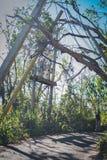 Τα συντρίμμια του τυφώνα Μαρία Στοκ Εικόνα
