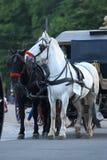 Τα συρμένα άλογα Στοκ φωτογραφίες με δικαίωμα ελεύθερης χρήσης