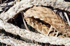Τα σχοινιά για τα σκάφη, ξεραίνουν τα φύλλα και τα φυτά, υπόβαθρο Στοκ Εικόνες