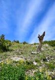 Τα σύννεφα και ένα απομονωμένο νεκρό δέντρο Tundra Στοκ φωτογραφία με δικαίωμα ελεύθερης χρήσης