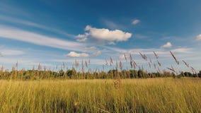 Τα σύννεφα κολυμπούν πέρα από τον τομέα το καλοκαίρι φιλμ μικρού μήκους