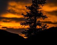 Τα σύνολα ήλιων πέρα από μια σκιαγραφία πεύκων και τα βουνά στην Αλάσκα Στοκ εικόνα με δικαίωμα ελεύθερης χρήσης