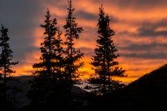 Τα σύνολα ήλιων πέρα από μια σκιαγραφία πεύκων και τα βουνά στην Αλάσκα Στοκ Φωτογραφίες