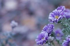 Τα τελευταία λουλούδια στοκ φωτογραφία με δικαίωμα ελεύθερης χρήσης
