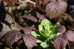 Τα τελευταία πράσινα φύλλα στοκ φωτογραφία με δικαίωμα ελεύθερης χρήσης