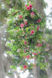 τα τεχνητά λουλούδια αυ& στοκ φωτογραφίες με δικαίωμα ελεύθερης χρήσης