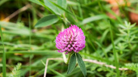 Τα τελευταία λουλούδια του καλοκαιριού Στοκ φωτογραφία με δικαίωμα ελεύθερης χρήσης