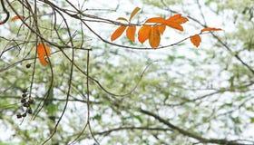 Τα τελευταία φύλλα Στοκ εικόνα με δικαίωμα ελεύθερης χρήσης