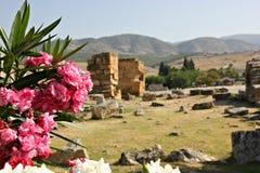 Τα τουρκικά λουλούδια Στοκ εικόνα με δικαίωμα ελεύθερης χρήσης