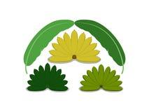 Τα τρία φρούτα και τα φύλλα μπανανών χρωμάτων απεικόνιση αποθεμάτων