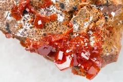 τα τραχιά κρύσταλλα Vanadinite κλείνουν επάνω στο λευκό Στοκ Εικόνες