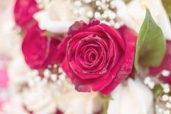Τα τριαντάφυλλα είναι υπέροχα στοκ εικόνα με δικαίωμα ελεύθερης χρήσης