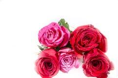 Τα τριαντάφυλλα τρία είναι κόκκινα και δύο Rive ρόδινα και άσπρα Στοκ Φωτογραφίες