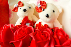 Τα τριαντάφυλλα αρκούδων στοκ εικόνα με δικαίωμα ελεύθερης χρήσης
