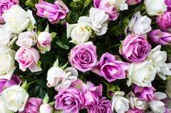 Τα τριαντάφυλλα εφαρμόζουν το σχέδιο και το υπόβαθρο Στοκ Εικόνα