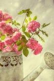 Τα τριαντάφυλλα στο πότισμα μπορούν Στοκ φωτογραφία με δικαίωμα ελεύθερης χρήσης