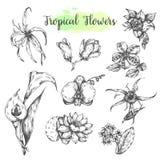 Τα τροπικά λουλούδια δίνουν το συρμένο lotuswater λουλούδι κρίνων, ορχιδέα, Καζαμπλάνκα Floral τροπικό σύνολο Διάνυσμα θερινών λο Στοκ Εικόνες