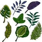 Τα τροπικά φύλλα νησιών σκάουν το σύνολο τέχνης Διανυσματική απεικόνιση στο κωμικό ύφος Ελεύθερη απεικόνιση δικαιώματος